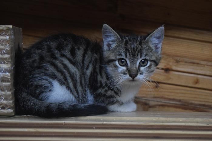 Cat 2939516 1280