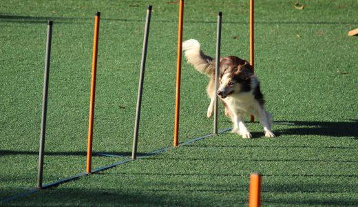 #619 【アスリート向け】方向転換するときは、切り返し脚ではなく、その一歩手前の脚でどれだけ減速しておけるかが重要
