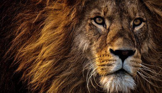 #644 ウエイトトレーニングの必要性を否定する「トラとかライオンはウエイトトレーニングしない」発言への上手な反応の仕方