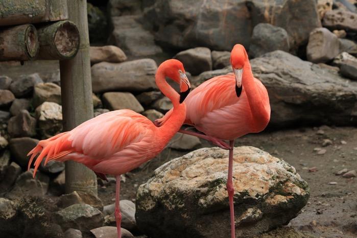 Flamingo 4236085 1280